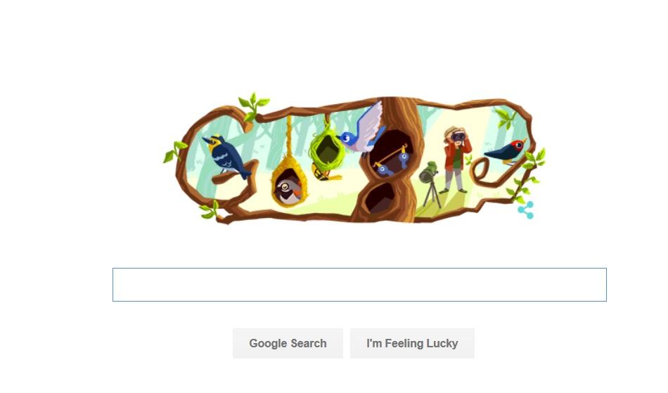 google, doodle, phoebe snetsinger, nature, birding