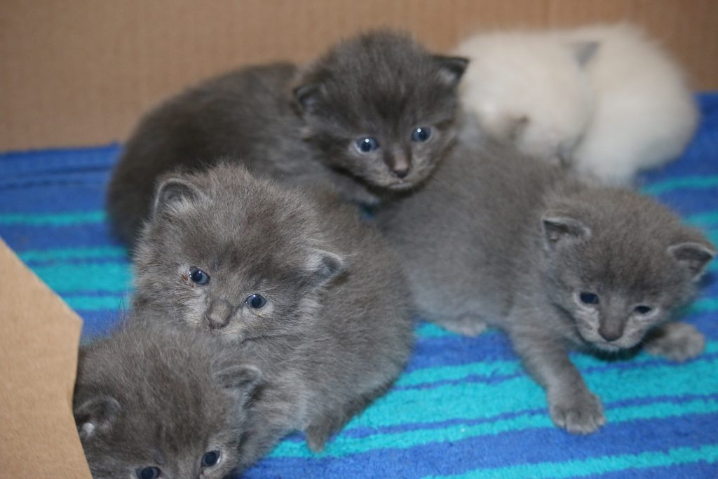kittens, cats, feral cats, florida
