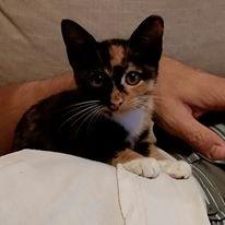 feral cat, kitten, nature
