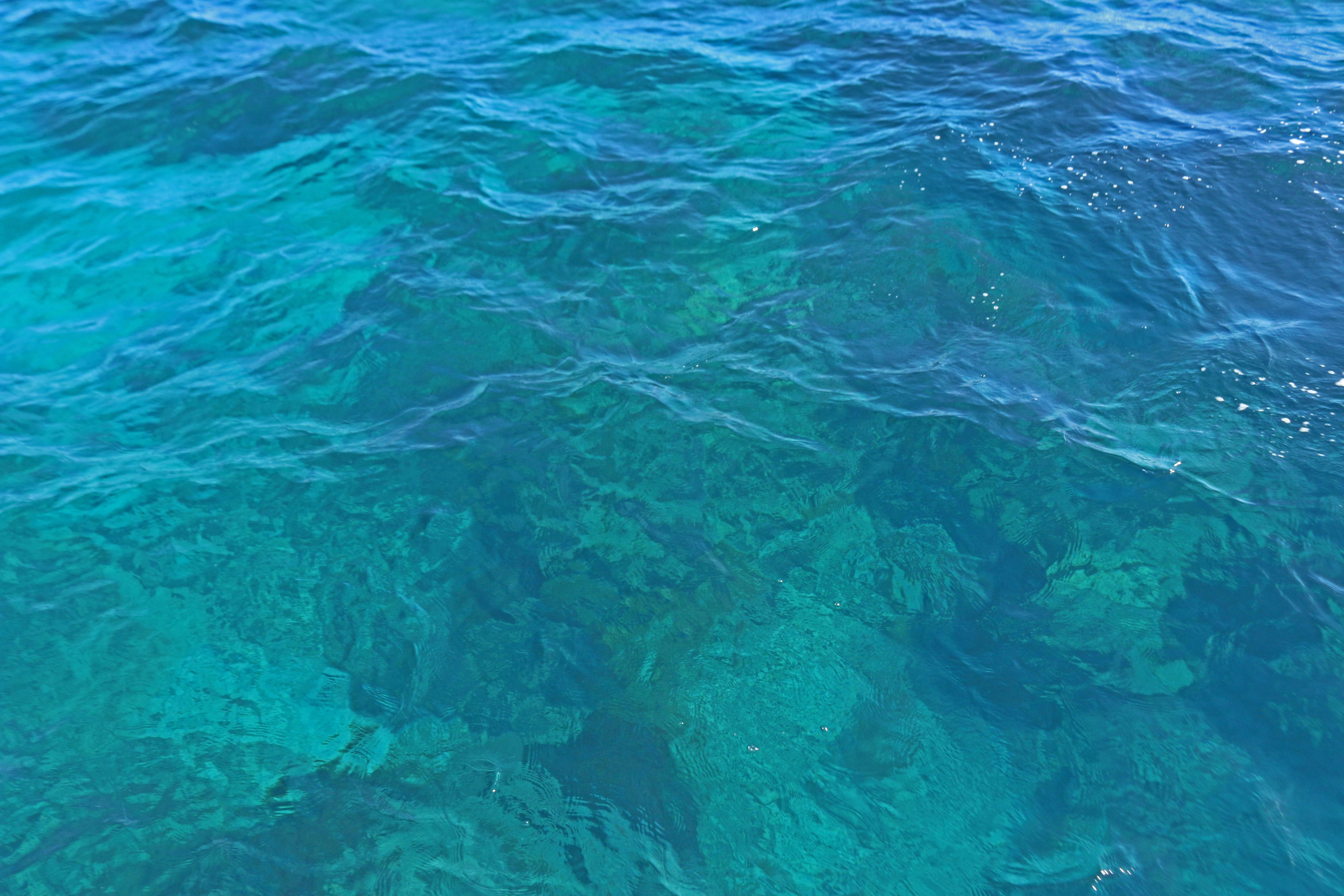 snorkel, nature, florida