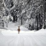 nature, montana, deer