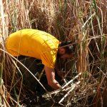 nature, science, arizona