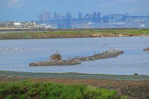 San Diego, nature, birding
