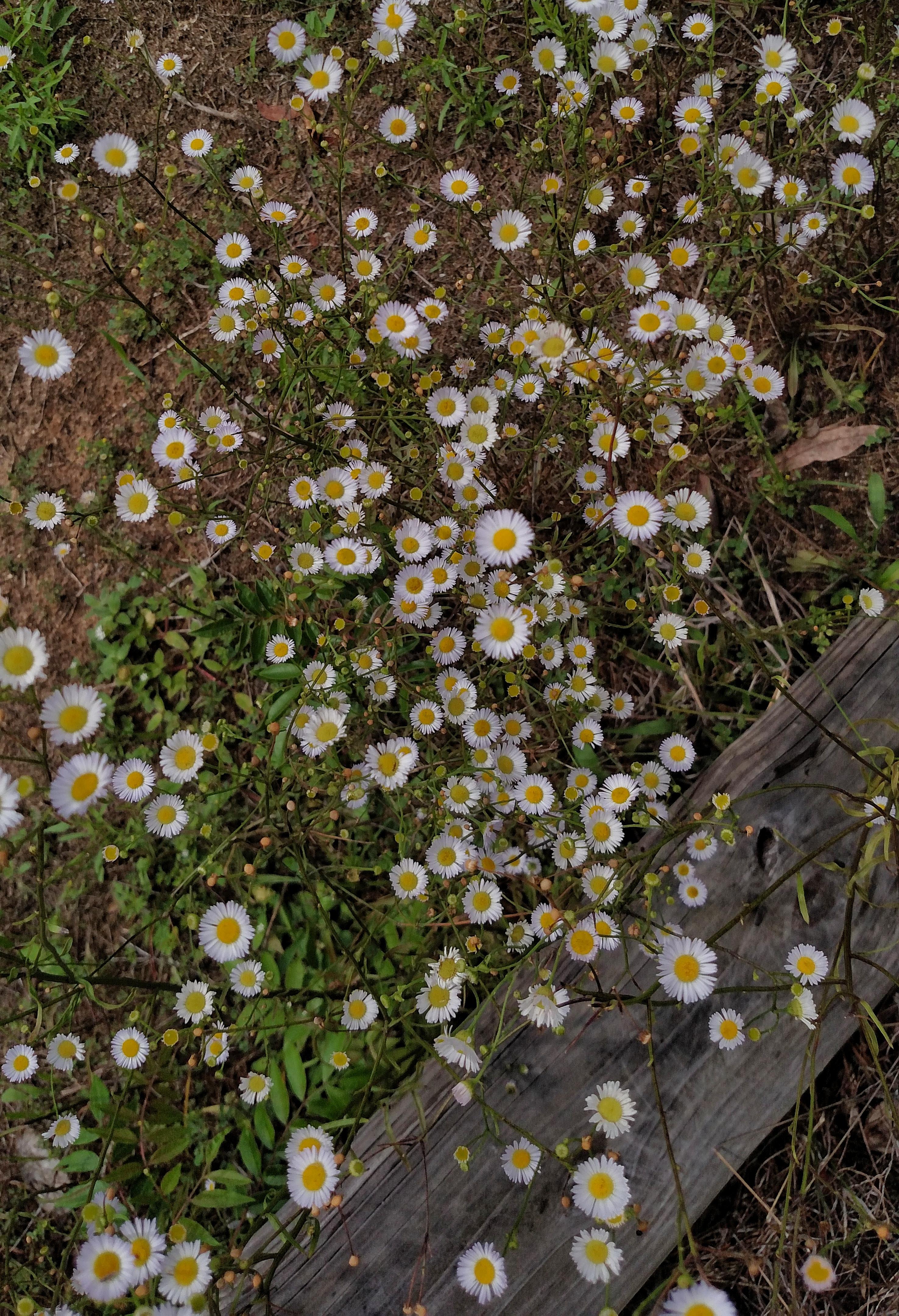 flowers, nature, florida, blossoms