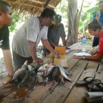 Measuring and recording fish data