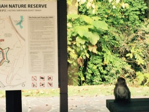 Long-tailed macaques are ubiquitous in Singapore. As are rules governing feeding and interaction with wildlife.