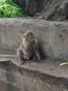 I swear that the monkeys I saw in Thailand have learned how to pose for tourists in return for peanuts.