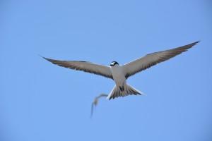 Tern.Better