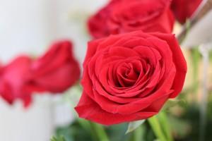 Rose1 © ACEQ