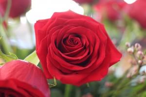 Rose3 © ACEQ