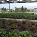 The rooftop garden of Environment Hall.  (Admittedly, this photo was taken in the early fall.)